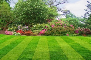 Pickering Landscaping Services